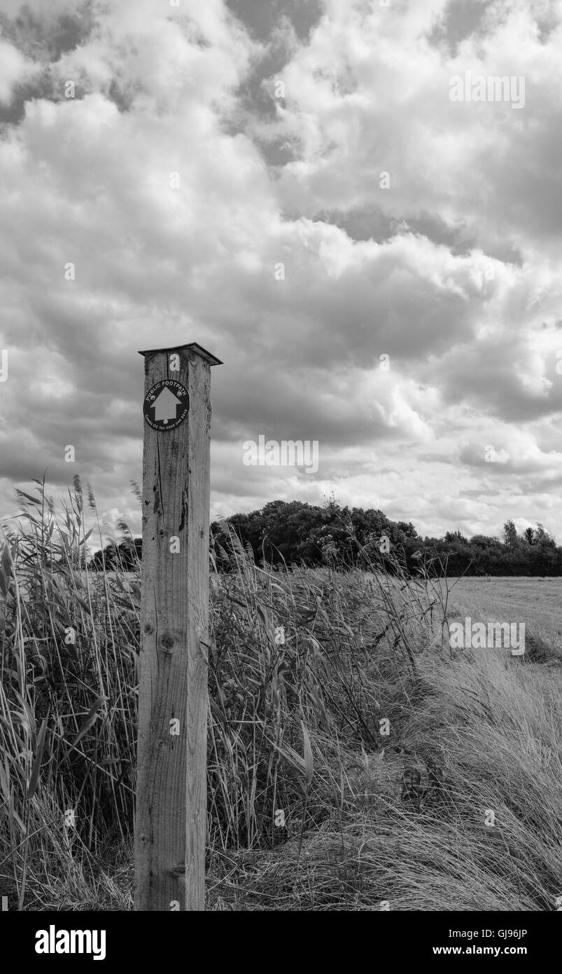 Public footpath sign seen atop a wooden post leading walkers to the side of a large wheat field in late summer. - Stock Image
