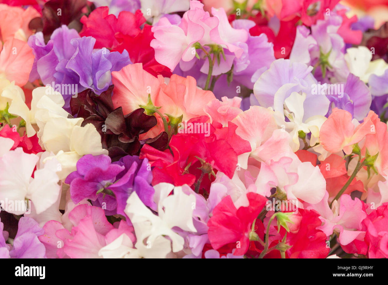 Multi Colored Flowers Beautiful Bouquet Colored Stock Photos & Multi ...