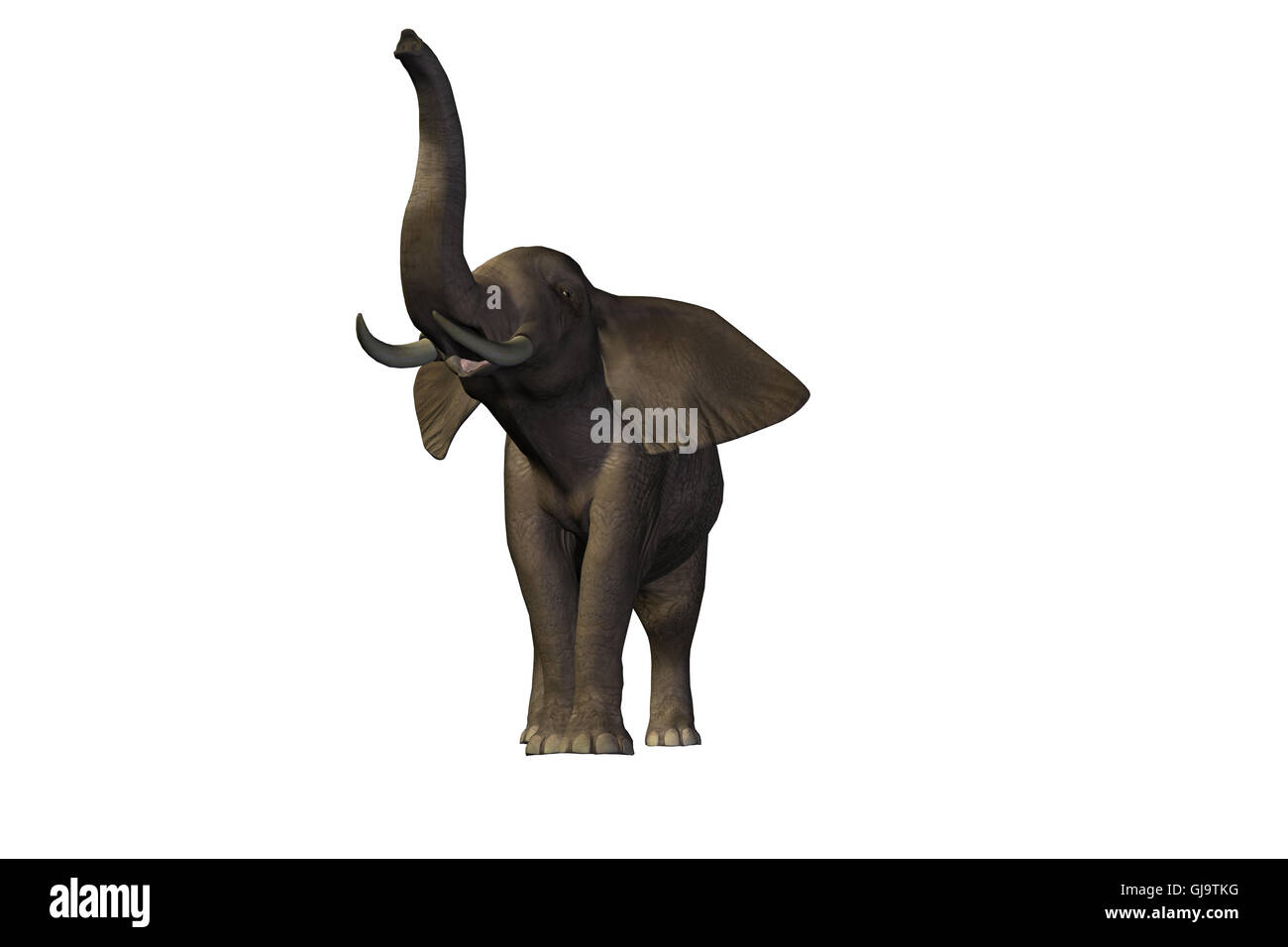 ELEPHANT 2 - Stock Image