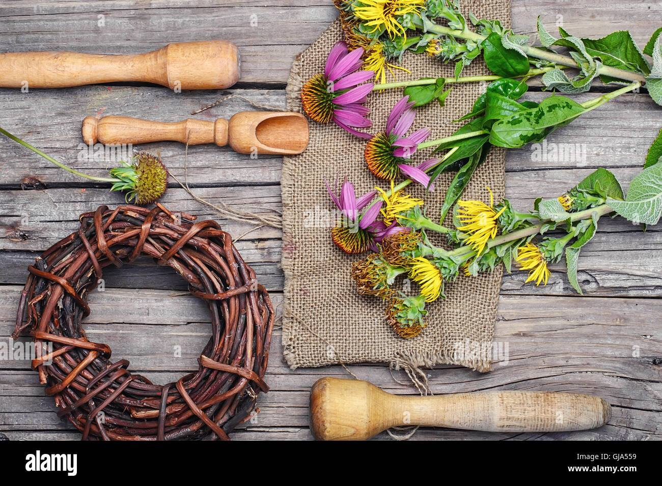 Set medicinal plant from Echinacea,elecampane and Licorice root - Stock Image