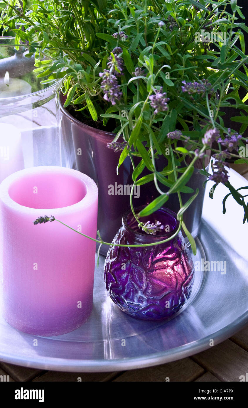 lanterns and lavenders - Stock Image