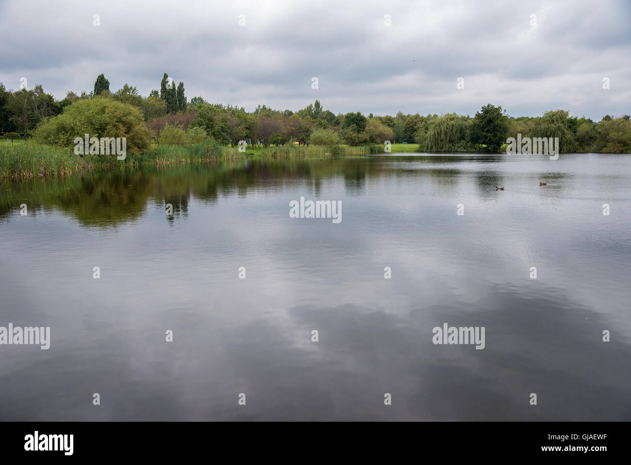 Valley of Three Ponds in Katowice on a cloudy day, Poland Stock Photo