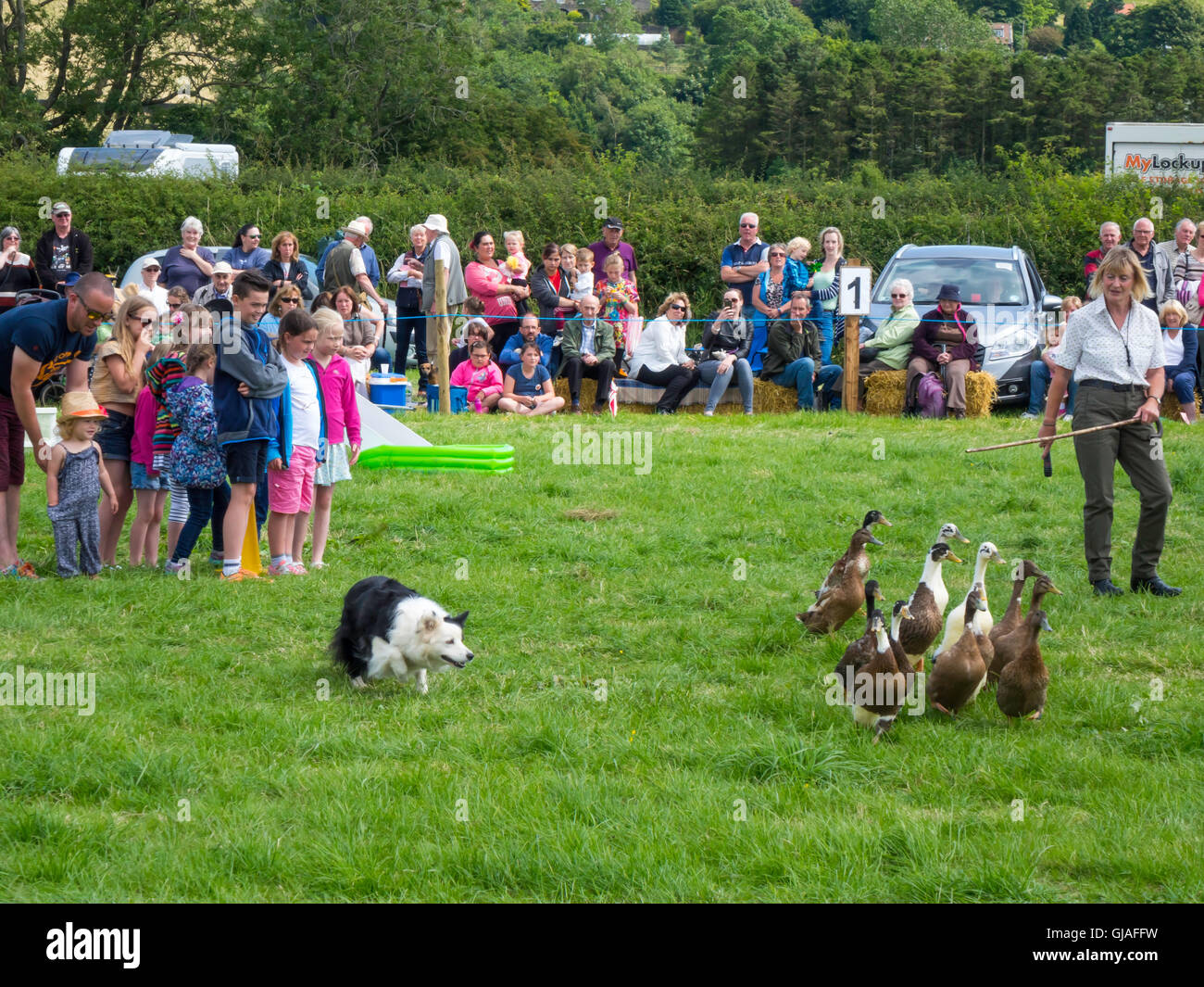 At an Agricultural Show in North Yorkshire The Elaine Hill Sheep Dod Display with a shepherdess and collie dogs - Stock Image