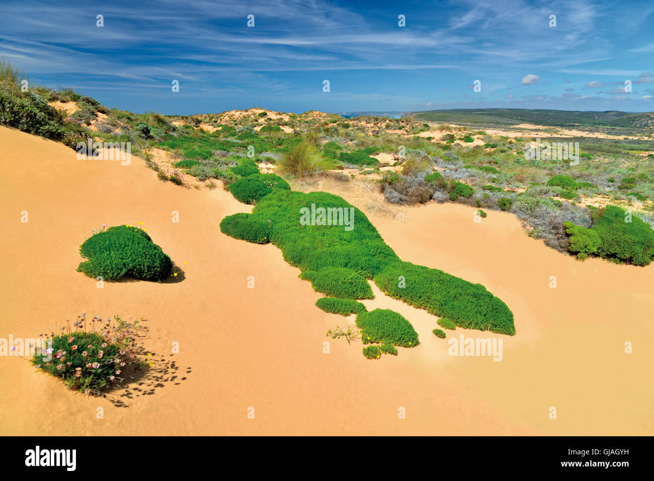 Portugal, Algarve: Sand dunes with coastal vegetation in the Nature Park Costa Vicentina - Stock Image