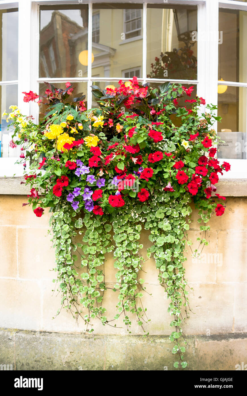 Colorful window box of flowers on a west bay window in a town - Stock Image