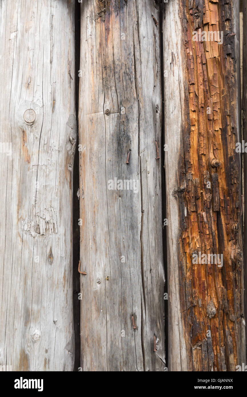 Several old cracked darkened logs without bark - Stock Image