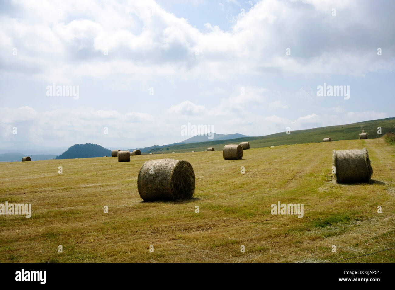 Hay stacks, Auvergne - Stock Image