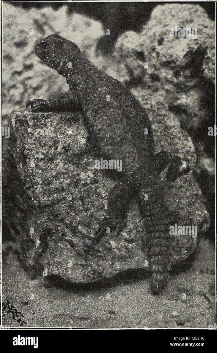 Blätter für Aquarien- und Terrarien-Kunde (1905) Stock Photo