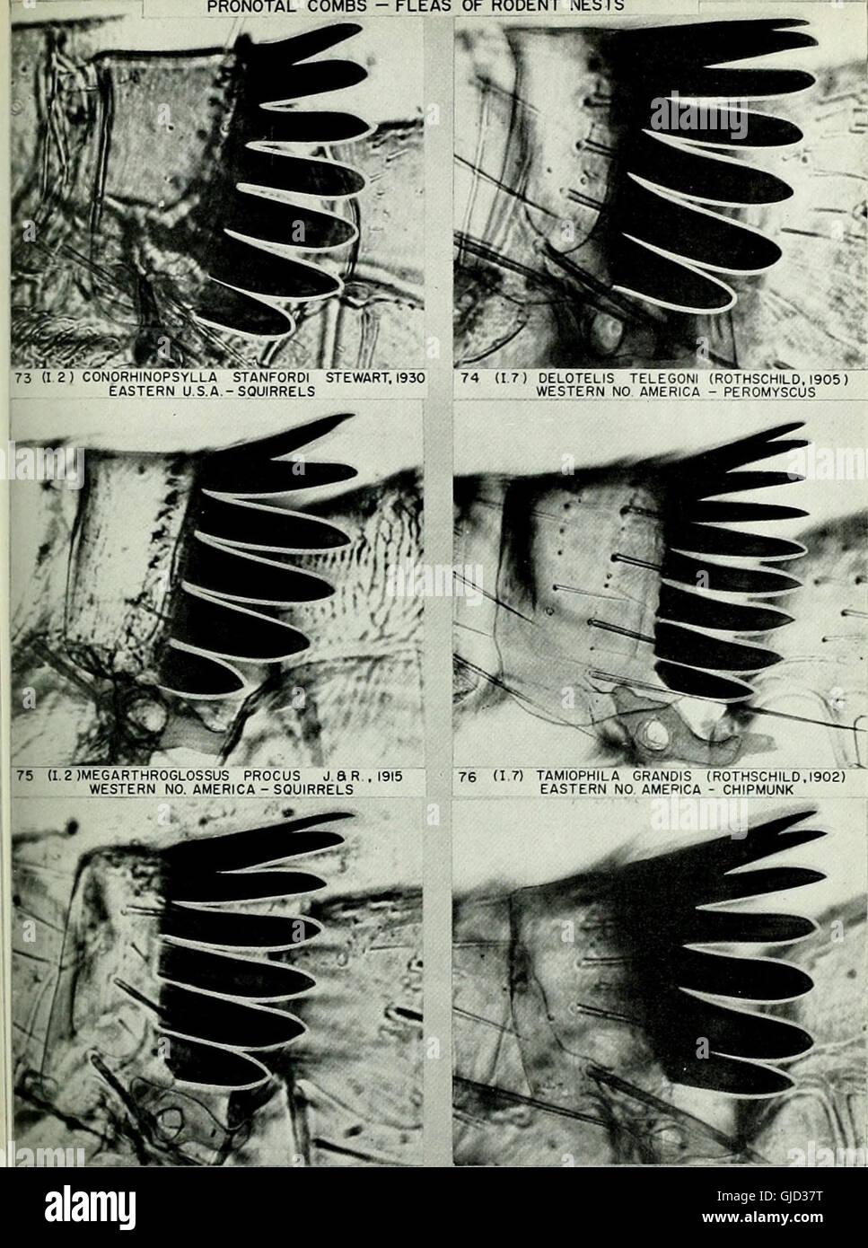 Bulletin of the British Museum (Natural History) (1972) Stock Photo