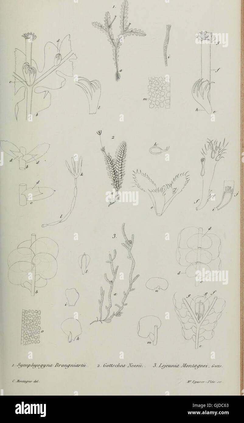 Annales des Sciences Naturelles Botaniques (1843) Stock Photo