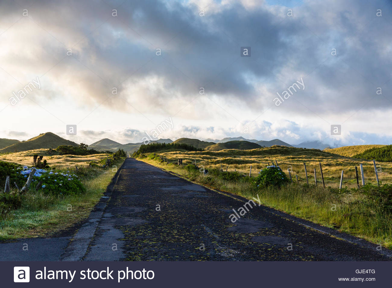 Road passing pastureland in front of Mount Pico, against the sun - Stock Image