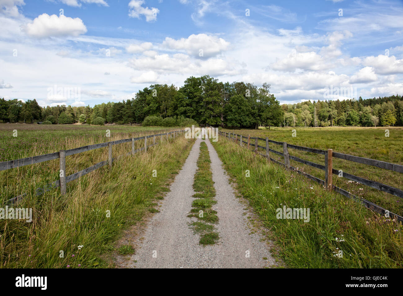 Leading line of country road - Stock Image