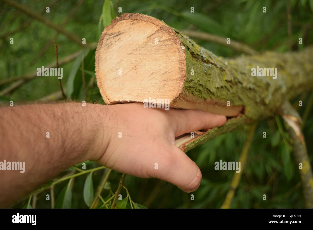 Man Hand Trapped in Wood - Stock Image