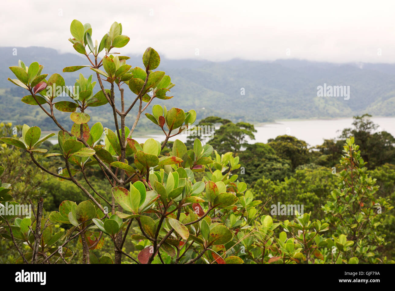 Costa Rica landscape, overlooking Arenal lake, Arenal, Costa Rica, Central America - Stock Image
