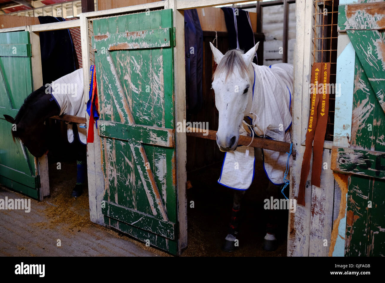 White and brown horses in a stable with a green door Stock Photo
