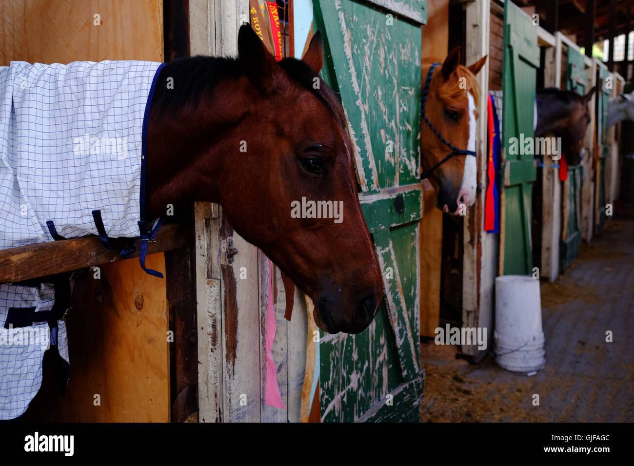 Horses in a stable with green stable doors Stock Photo