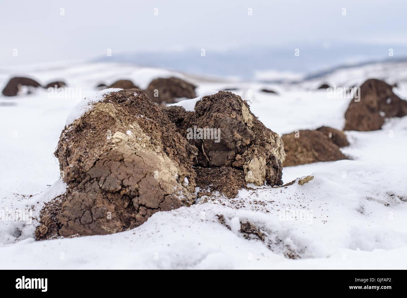 Tillage under snow, winter landscape Stock Photo