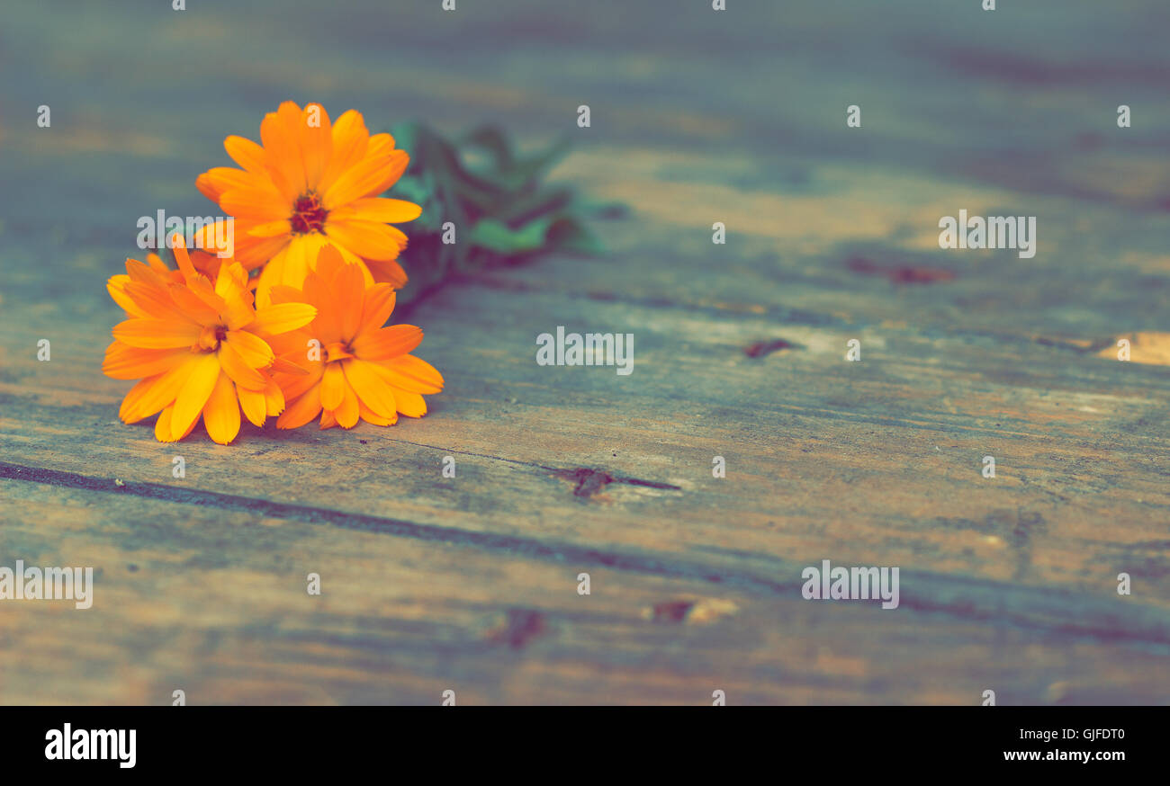 Marigold - Stock Image
