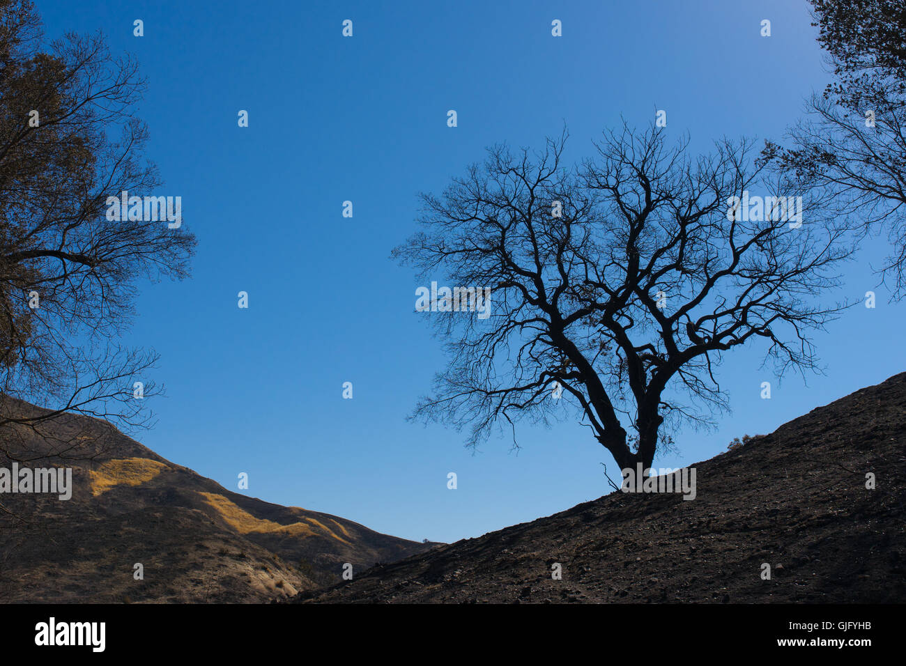 Silhouette of burned tree on the horizon on hills in southern California. - Stock Image