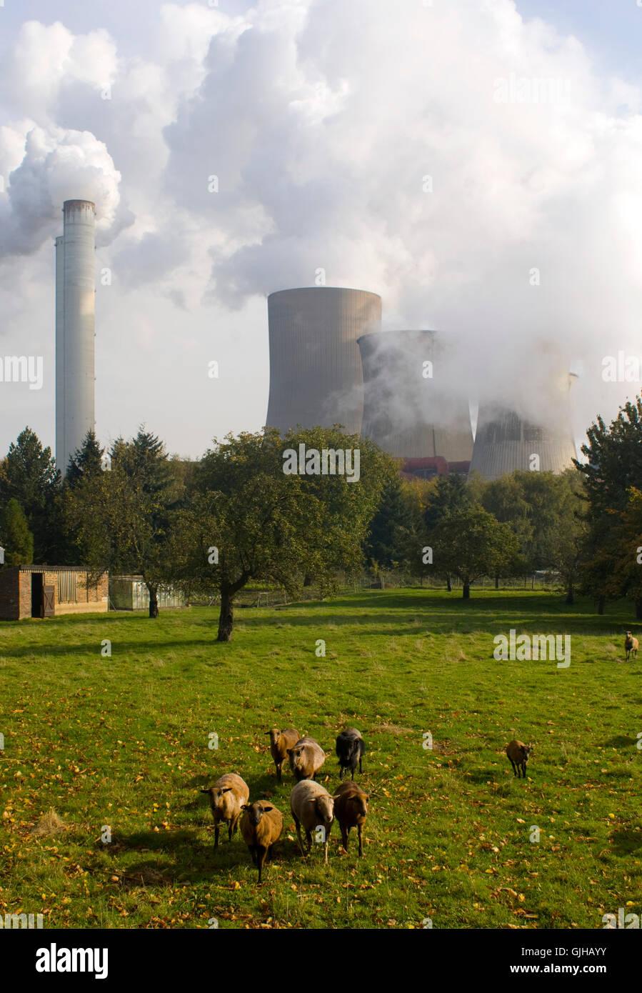 BRD, Deutschland, NRW, Bergheim, Auenheim, Blick auf das RWE Kraftwerk Niederaußem, RWE-Power. Das Kraftwerk - Stock Image