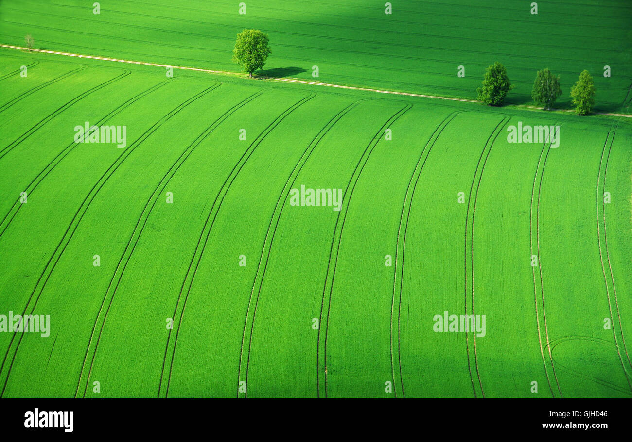 field spring May - Stock Image