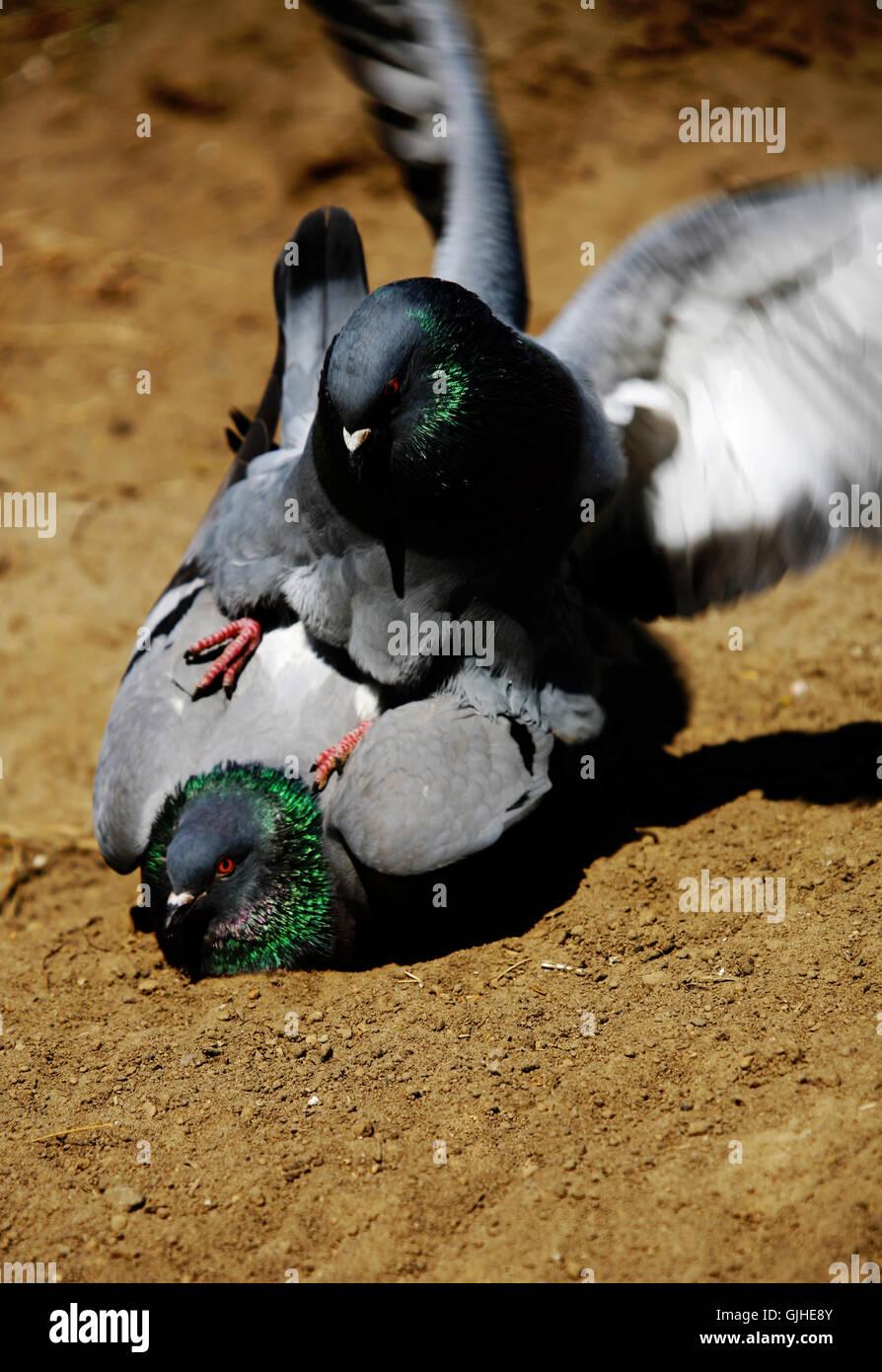 travel bird birds Stock Photo