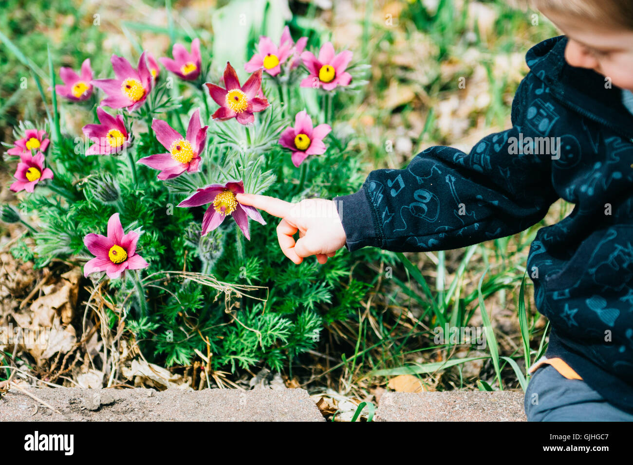Boy pointing at flowers - Stock Image