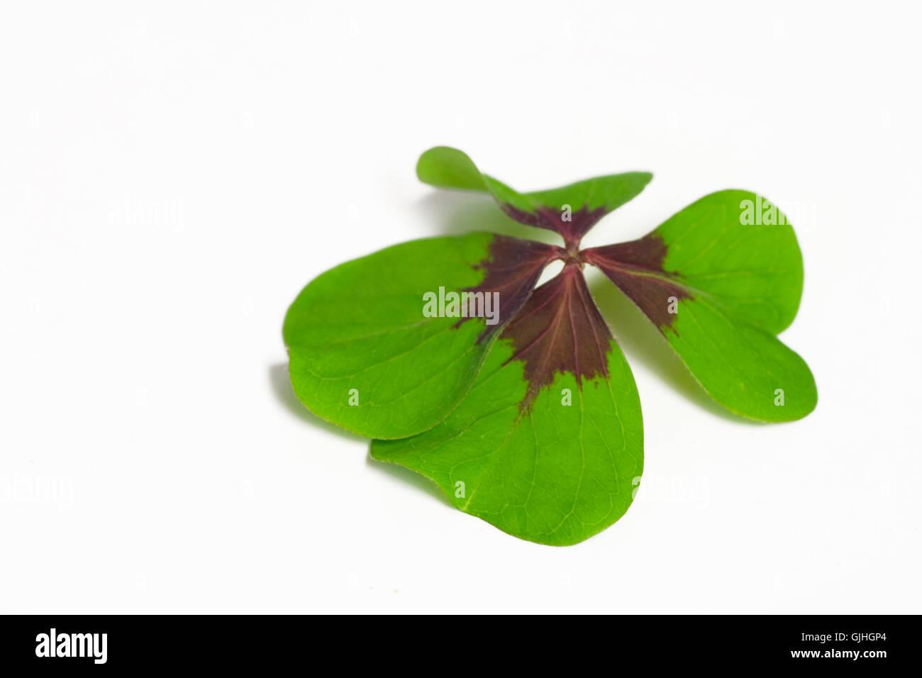 optional green leaves - Stock Image