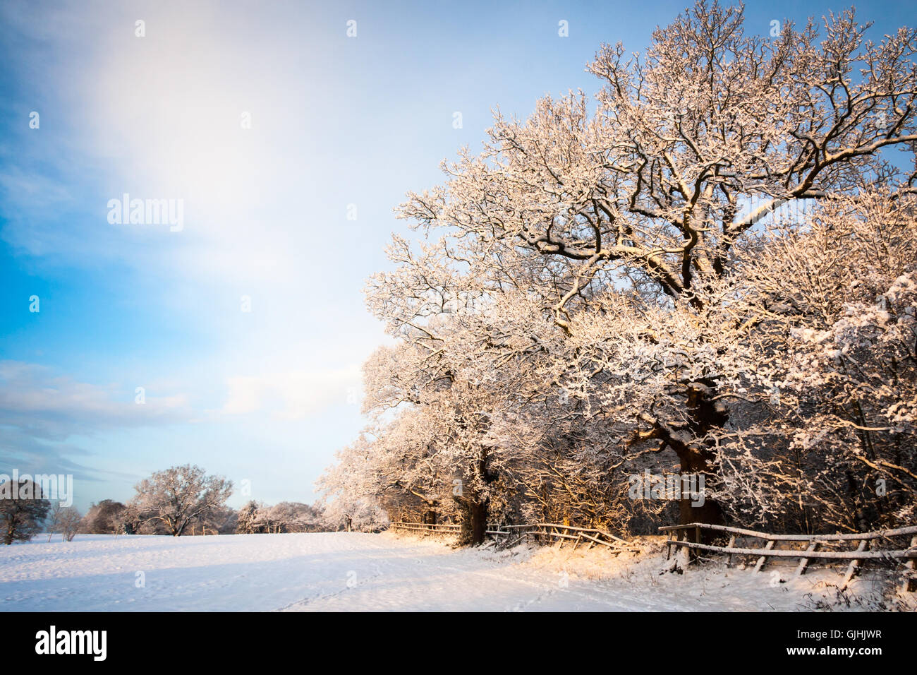 Snow covers a field and the bare branches of a large tree on a sunny blue sky winters day Stock Photo