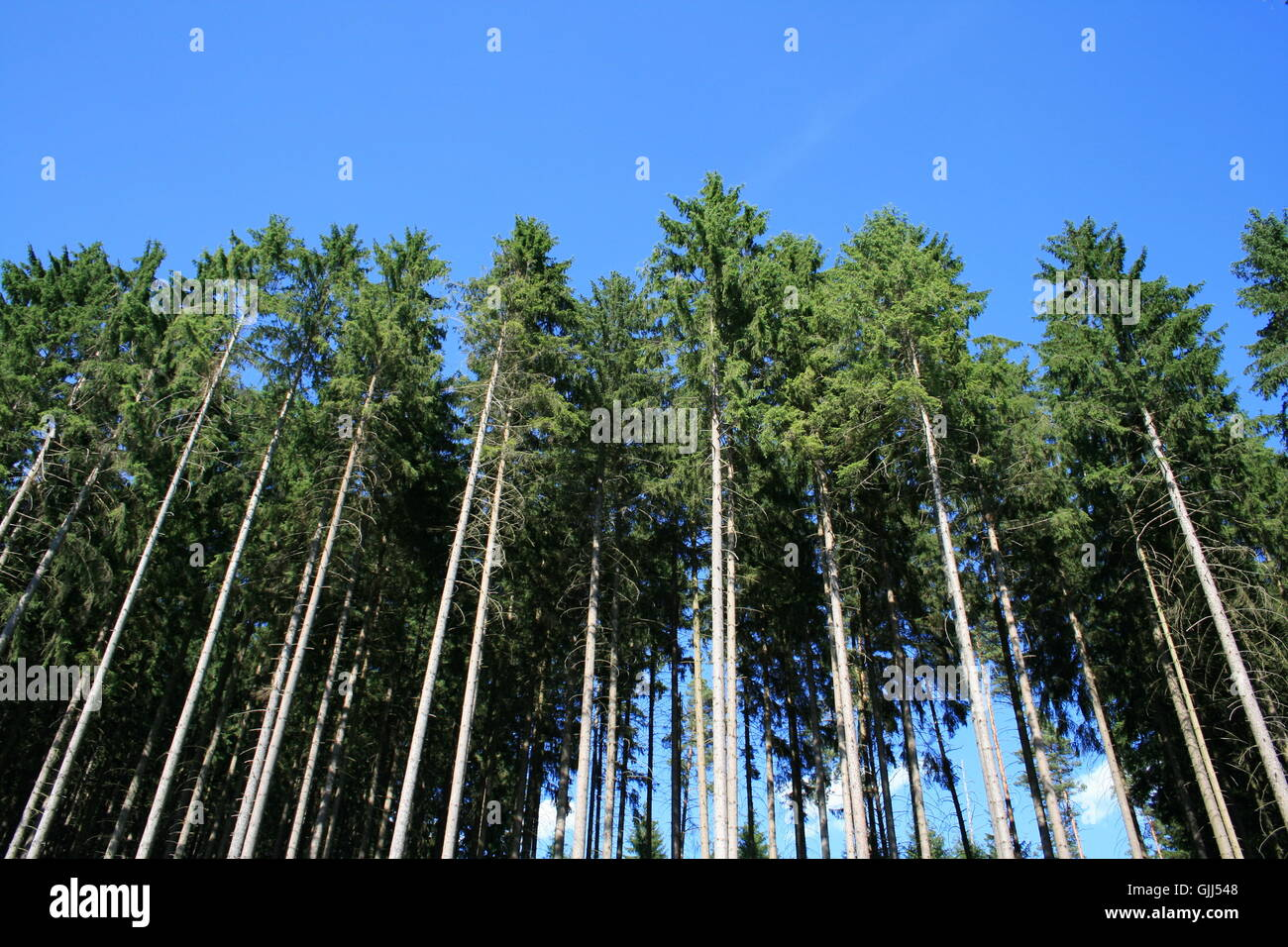 tree trees tribes - Stock Image