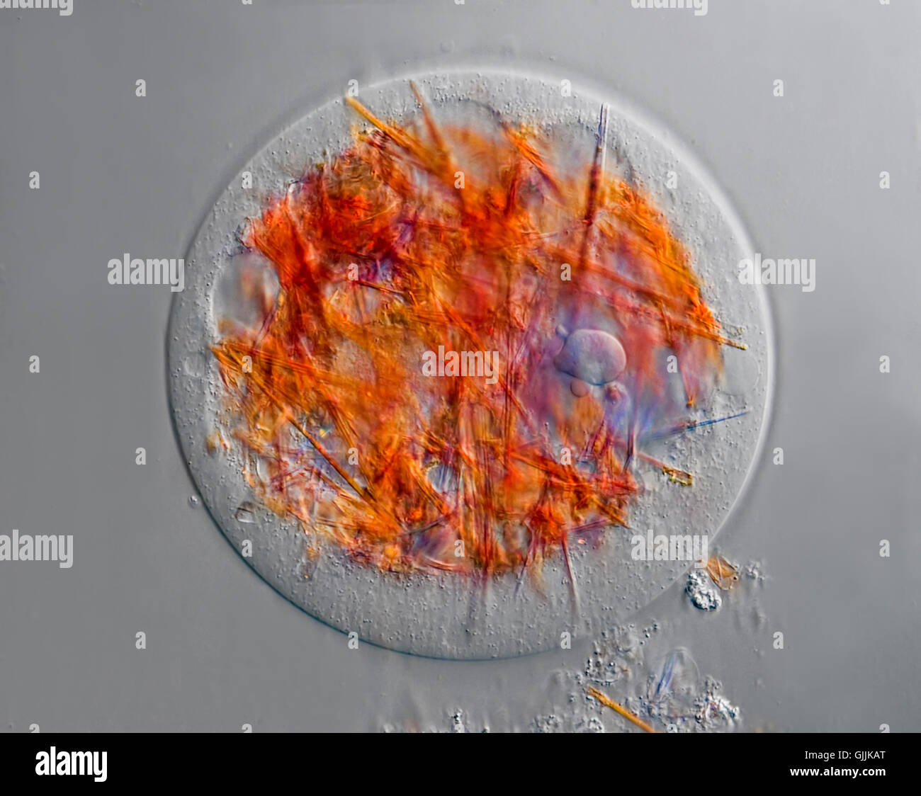 cell cell nucleus relief - Stock Image