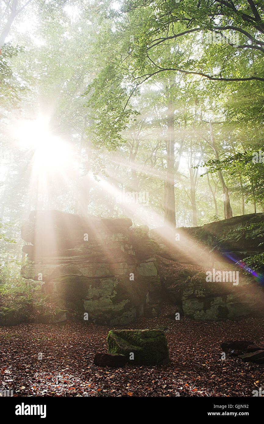 tree trees sunbeams - Stock Image