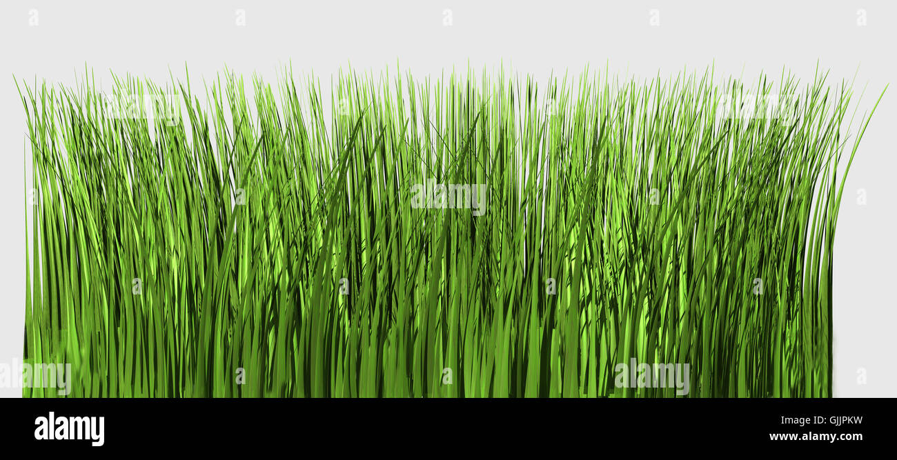 isolated blades of grass - Stock Image