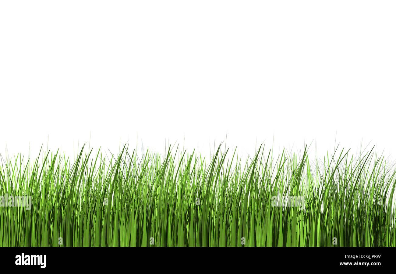 optional blades of grass blade of grass - Stock Image