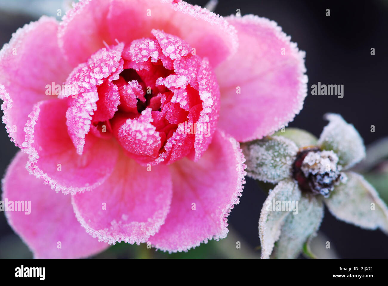winter flower plant Stock Photo