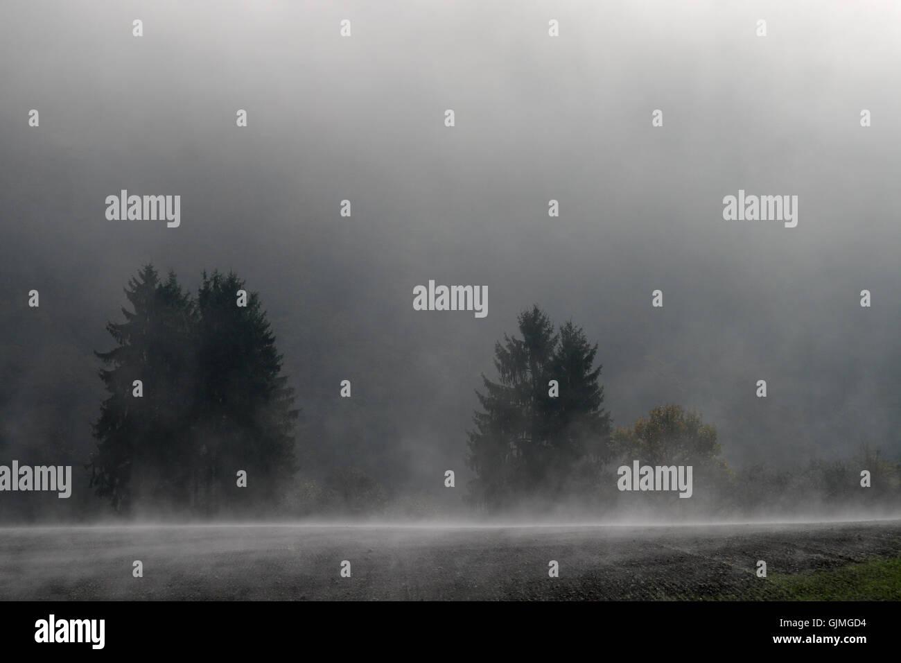 field fog sunrise Stock Photo