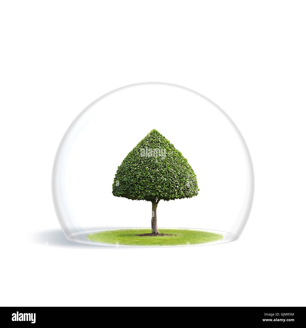 tree ecology world protection - Stock Image