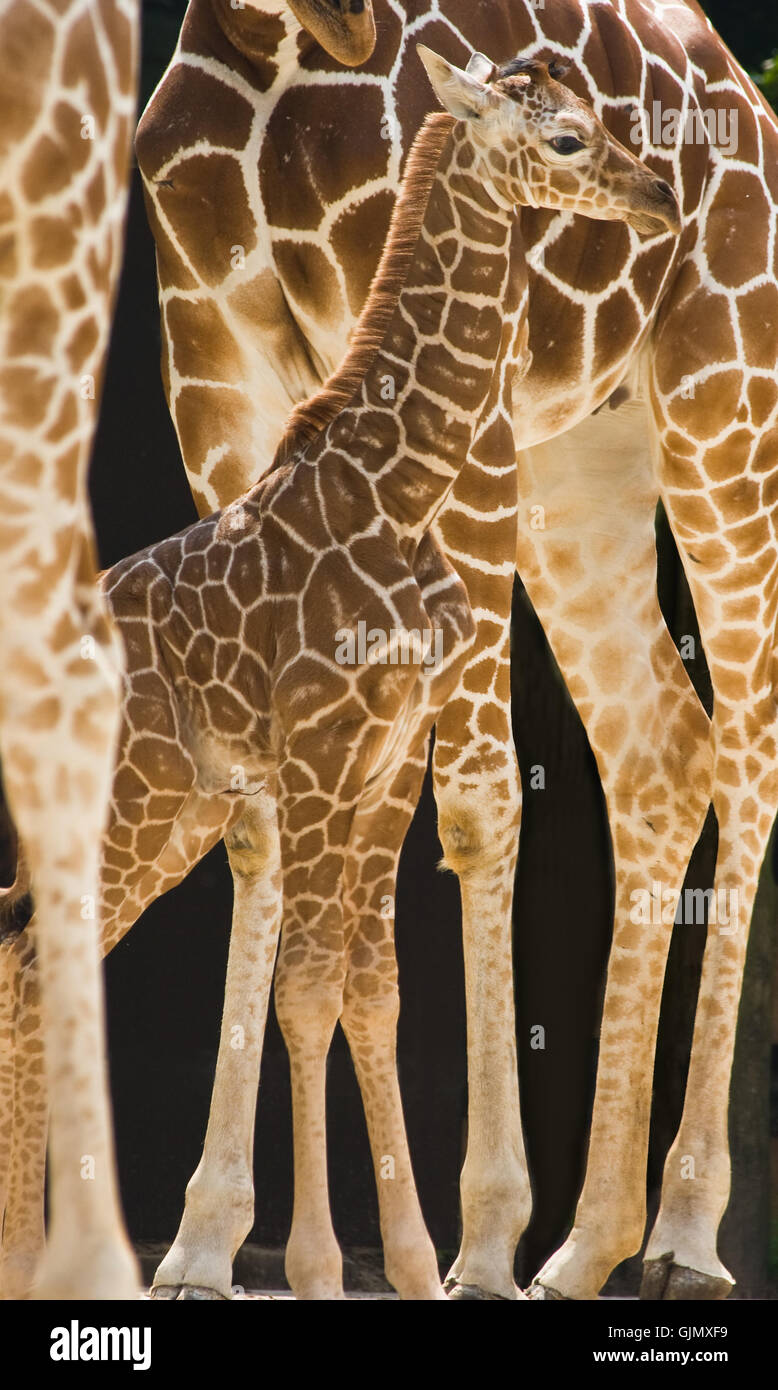 animal mammal animals - Stock Image