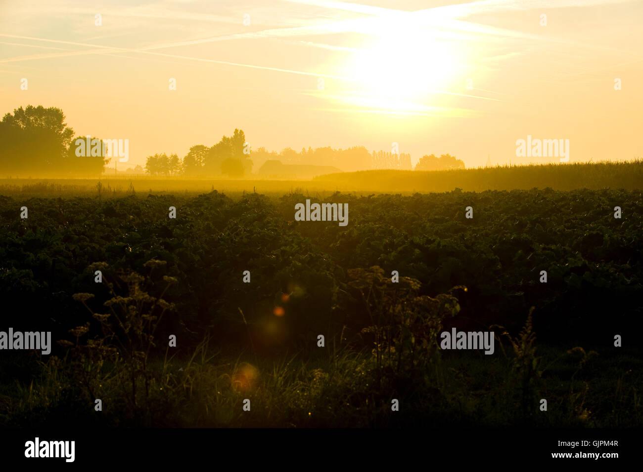 sunrise over Flanders - Stock Image