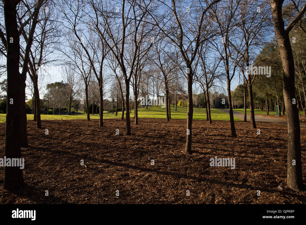 Trees in Nurragingy Reserve Blacktown - Stock Image