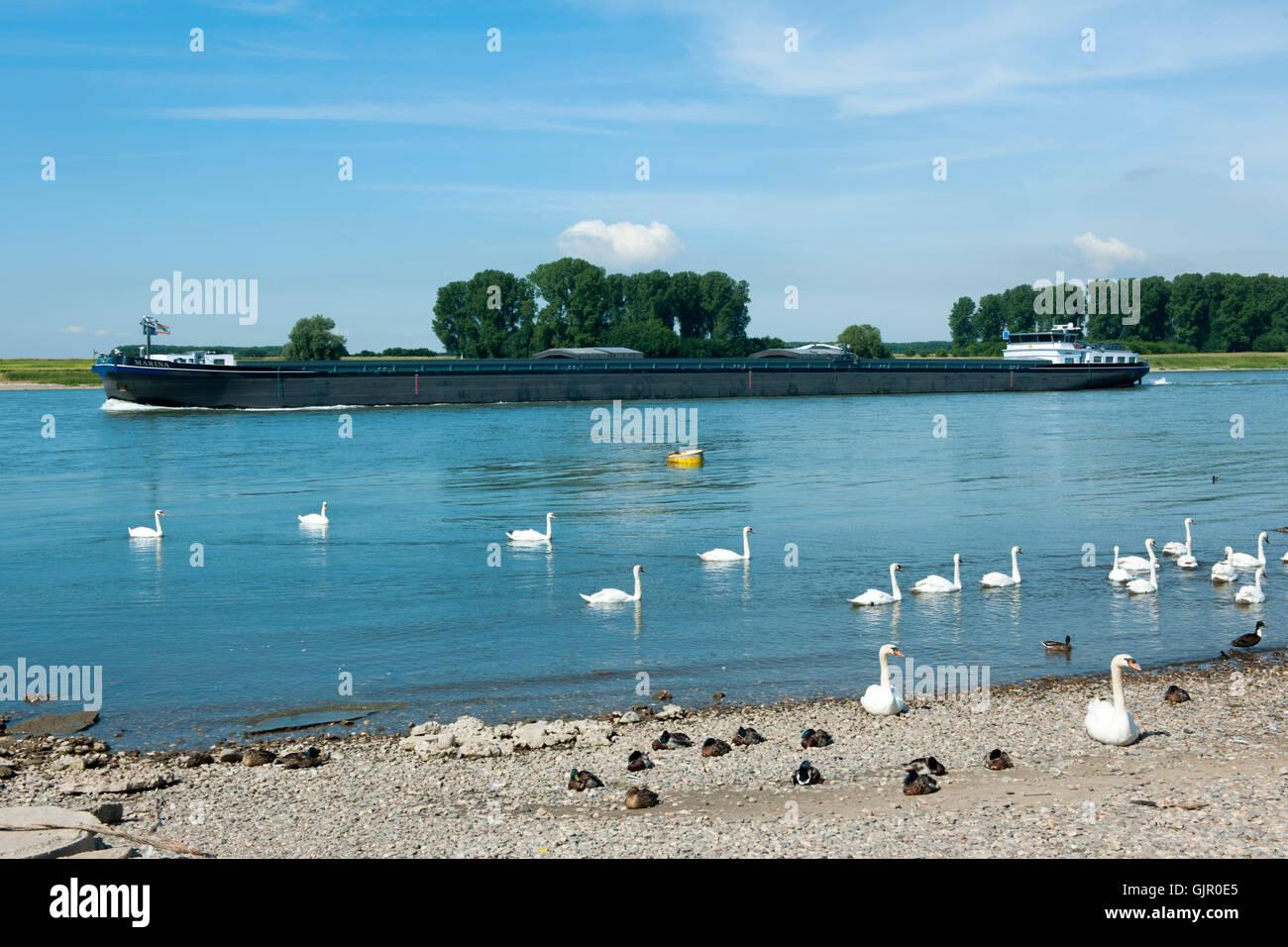Deutschland, Leverkusen-Hitdorf, Rhein am Fähranleger Stock Photo
