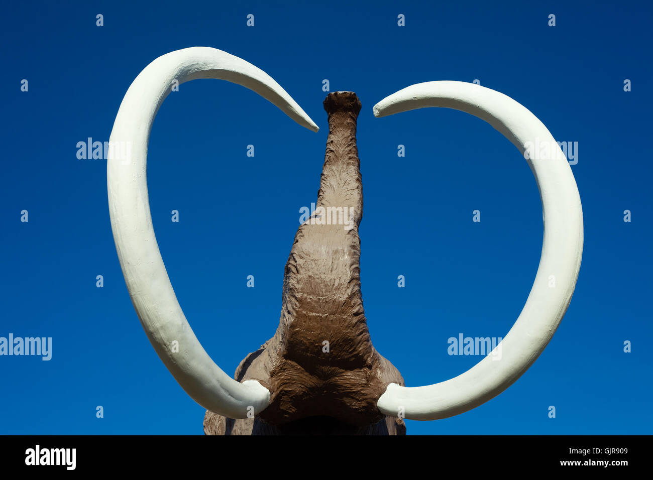 Mammoth tusks: mining, products 90