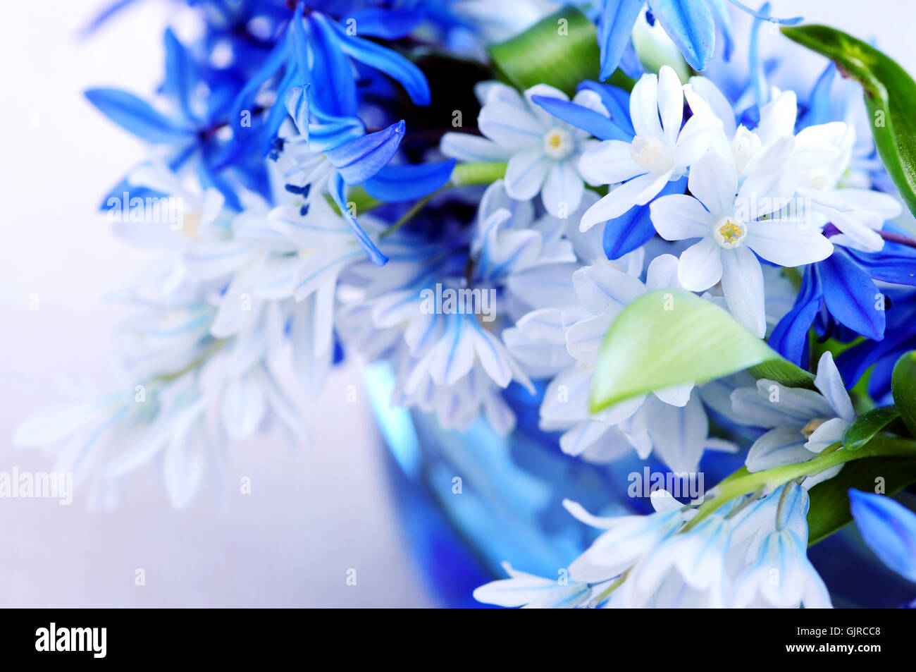 Cocaine flower stock photos cocaine flower stock images alamy blue flower flowers stock image izmirmasajfo Image collections