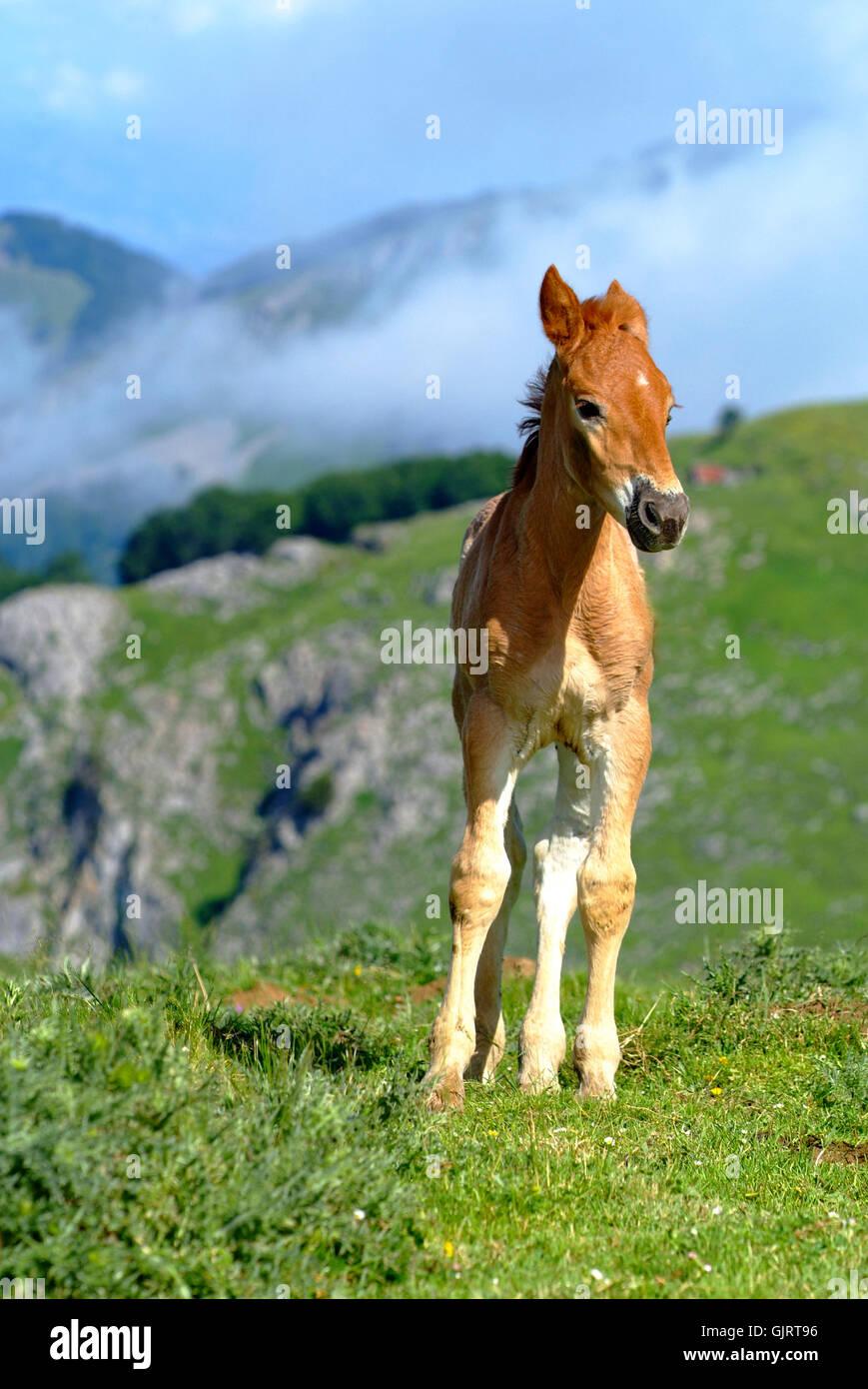 horse tenderness colt - Stock Image
