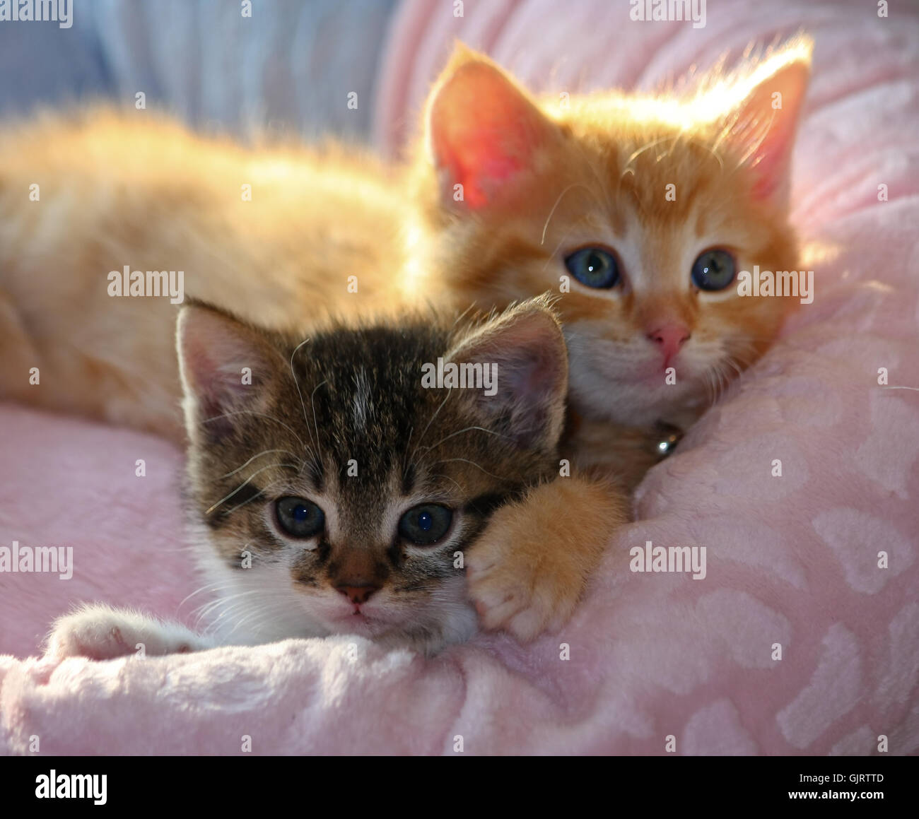 kittens - Stock Image