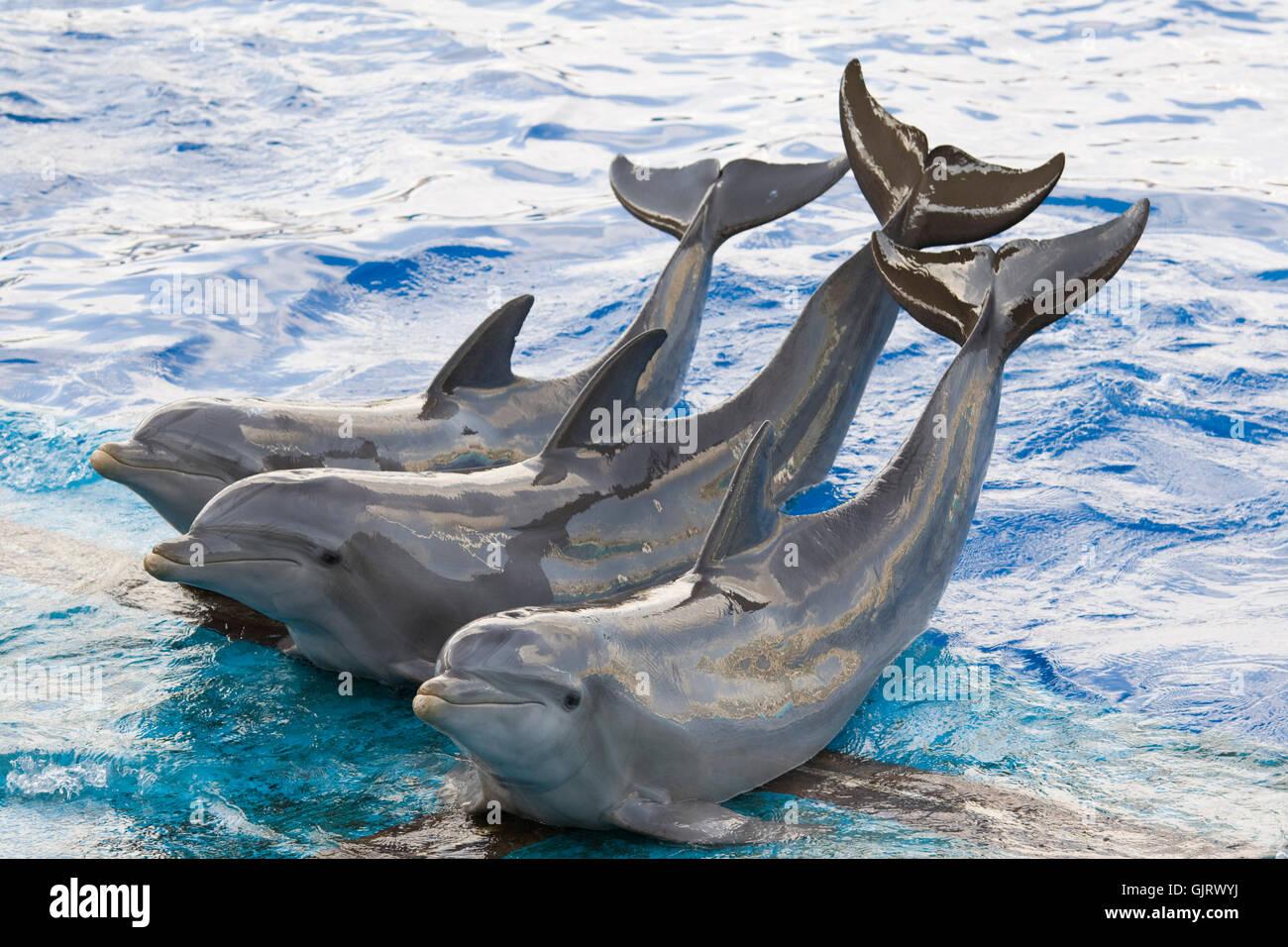 mammal dolphin streamlined - Stock Image