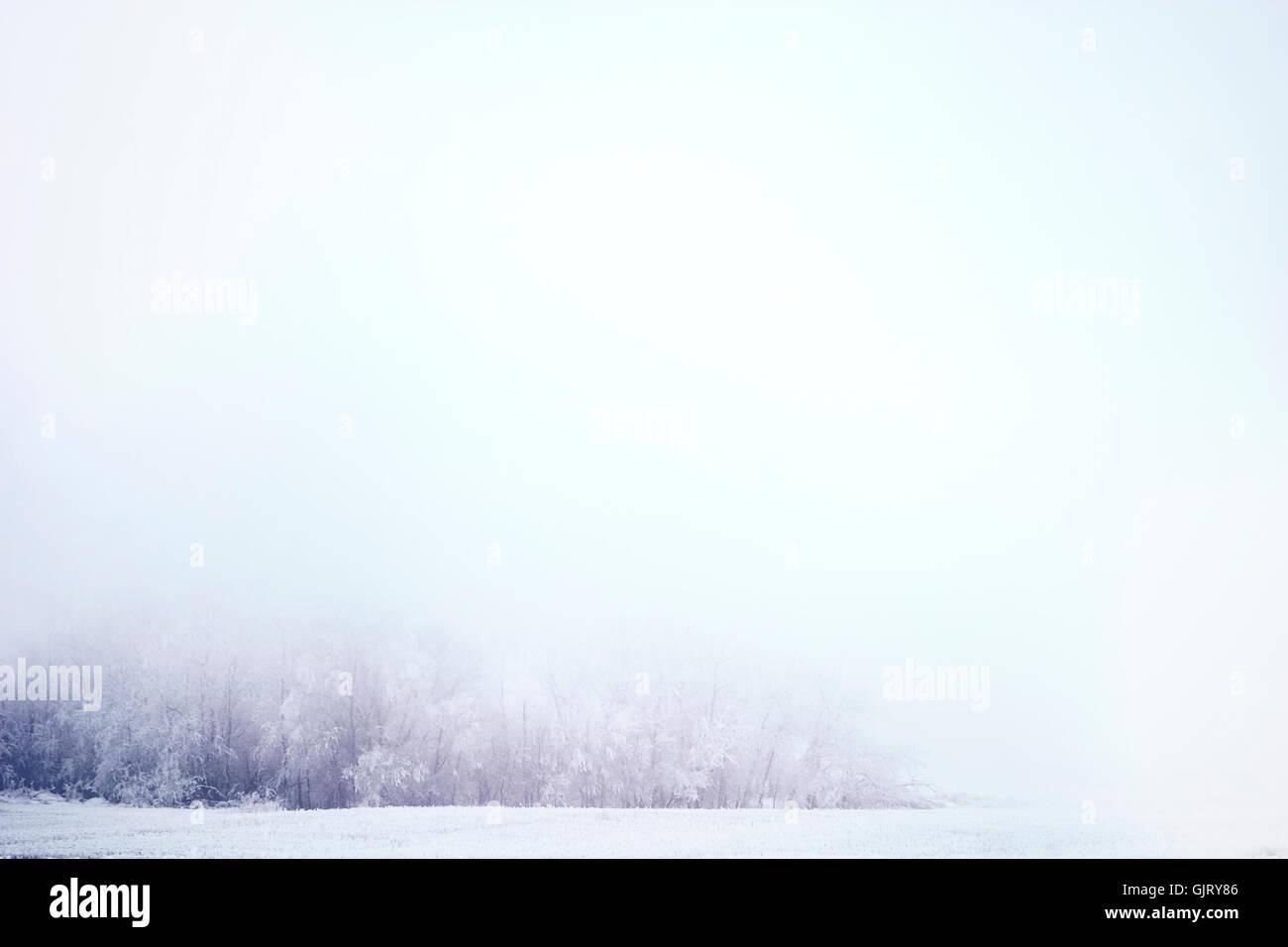 god tree horizon - Stock Image