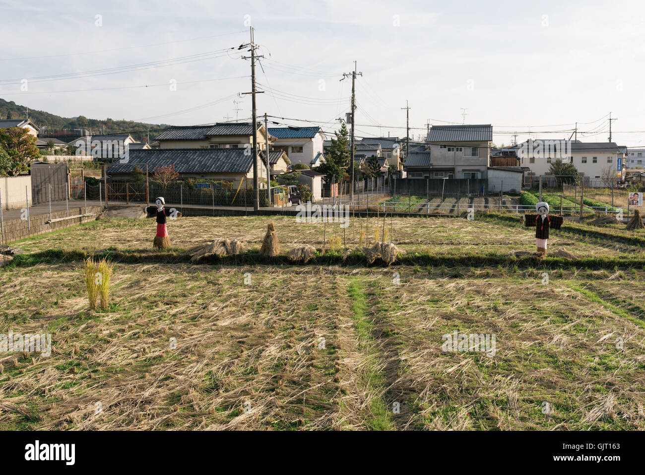 Nara, Japan - November 21 2016: Rice field with scare-crows after harvest at the outskirt of Nara City in Japan. - Stock Image