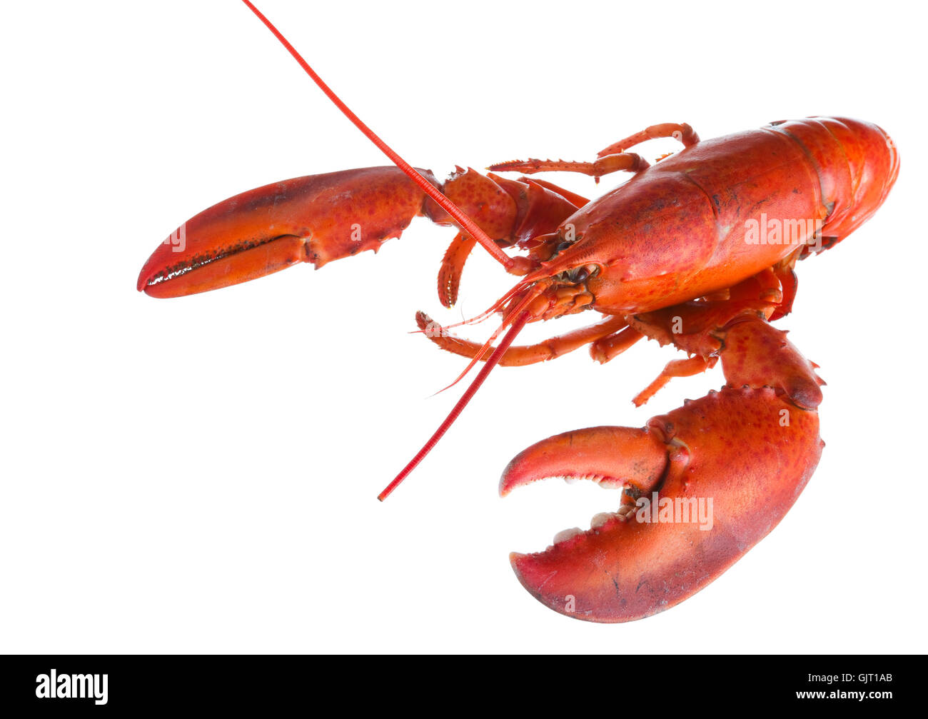 lobster claw luxury - Stock Image
