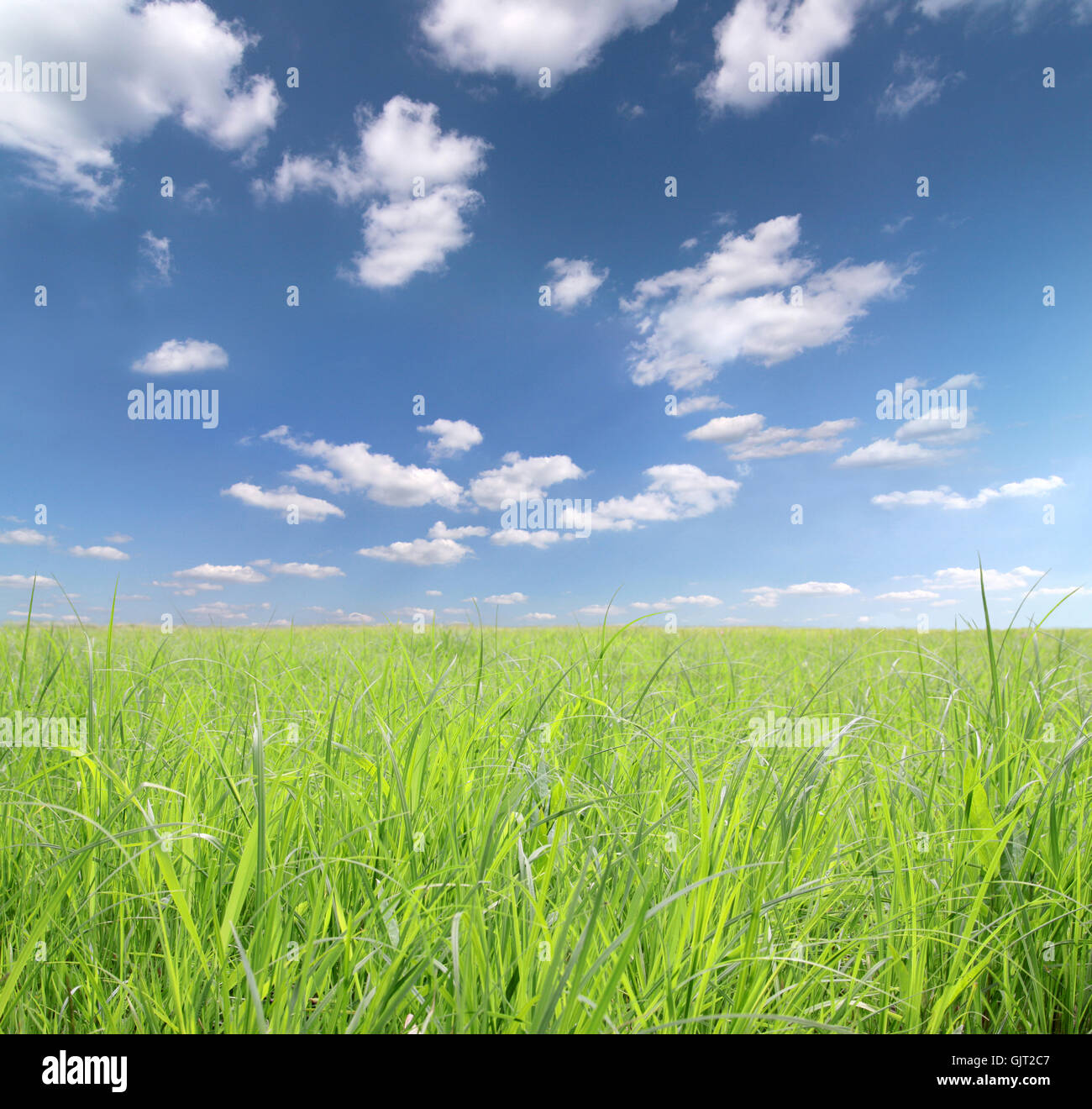 horizon summer summerly - Stock Image